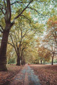Hyde Park View